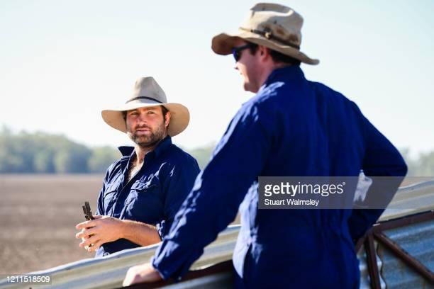 farmers load sheep - cultura australiana - fotografias e filmes do acervo