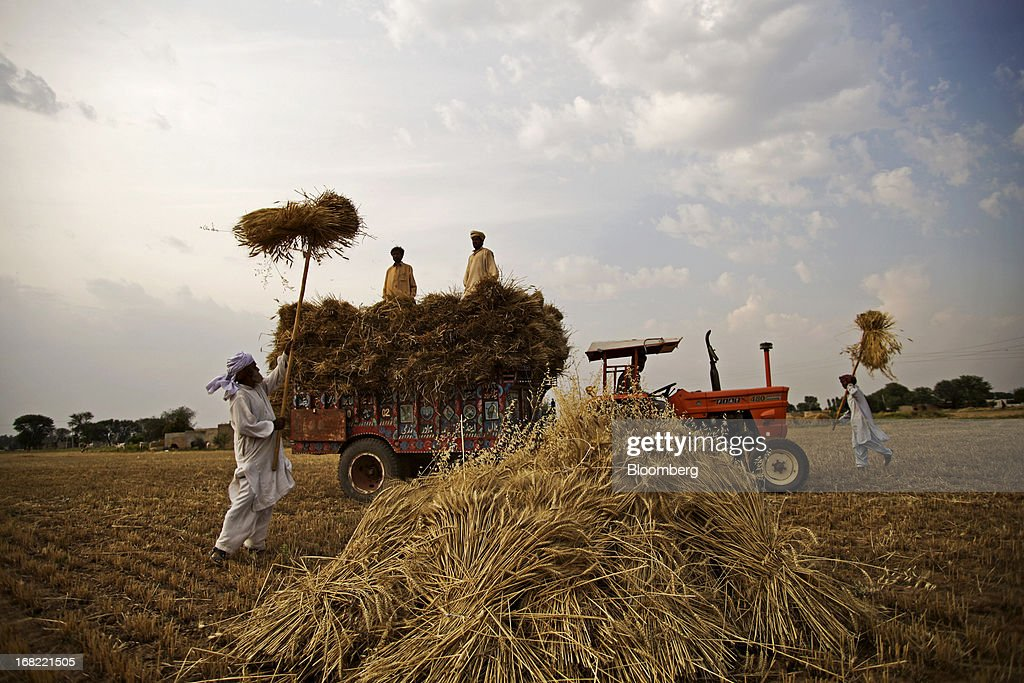 Farmers load stacked bundles of wheat onto a tractor using pitchforks during a harvest in the Fatehganj district of Punjab province, Pakistan, on Sunday, May 5, 2013. Pakistan wheat output to increase this year, the U.S Department of Agriculture's Foreign Agricultural Service said in a report posted today on its website on April 4. Photographer: Asad Zaidi/Bloomberg via Getty Images