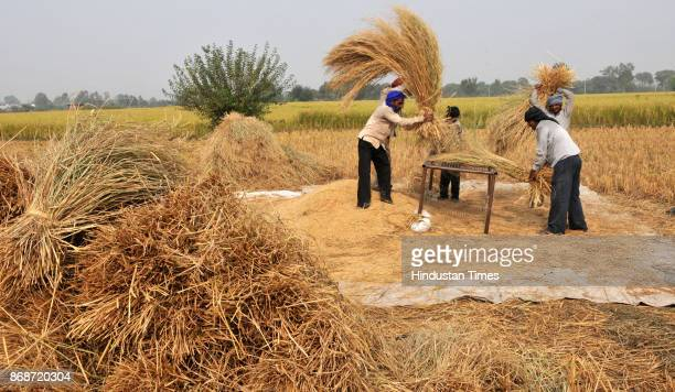 Farmers manually threshing rice on a stand at Suchetgarh village on October 31 2017 in RS Pura about 38 kms from Jammu India