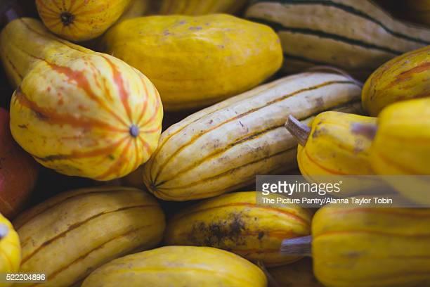 Farmer's market delicata squash