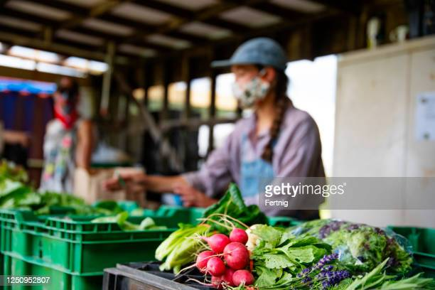 a farmers market in operation during covid-19 - farm worker stock pictures, royalty-free photos & images