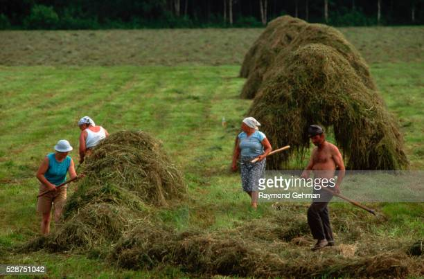 farmers moving hay - bialowieza forest stock pictures, royalty-free photos & images
