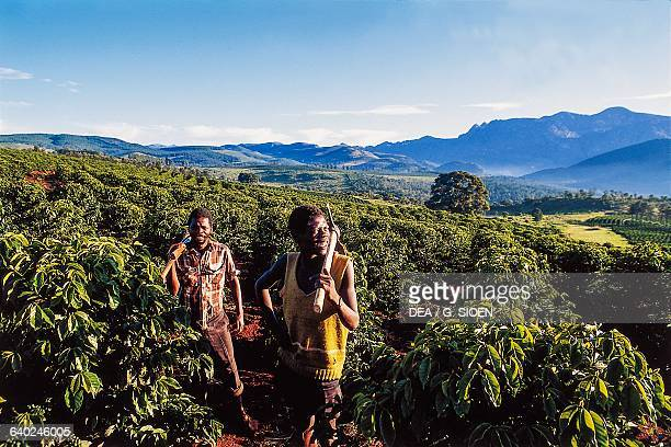 Farmers on a coffee plantation Chimanimani national park Zimbabwe