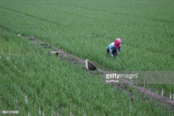 Farmers perform activities on agricultural land in the district of Bekasi West Java province Indonesia on Sunday January 14 2018 Based on data from...