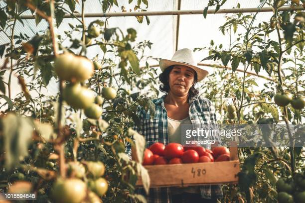 farmers - farm worker stock pictures, royalty-free photos & images