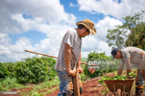 farmers planting coffee. - brazil stock pictures, royalty-free photos & images