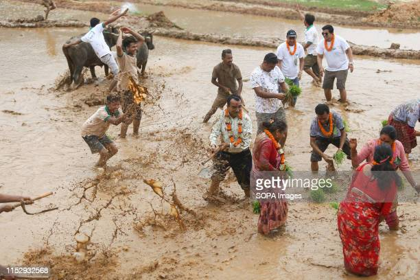 Farmers play in muddy water as they plant rice crop during a Festival Farmers celebrate National Paddy Day Festival on 'Asar 15' of the Nepali...