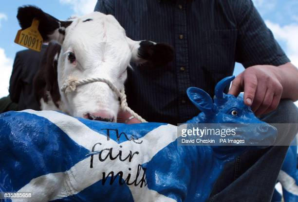 Farmers protest over falling milk prices outside the Scottish parliament in Edinburgh Prices have fallen by 20% since the start of the year according...