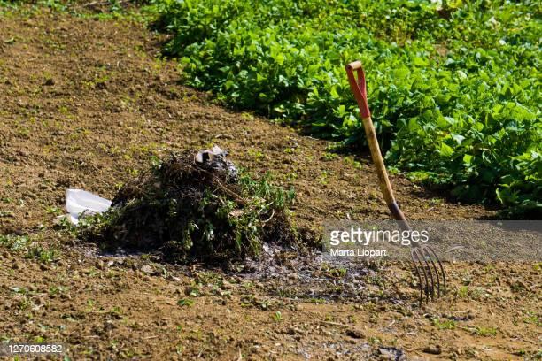 farmers rake with remains bonfire dried