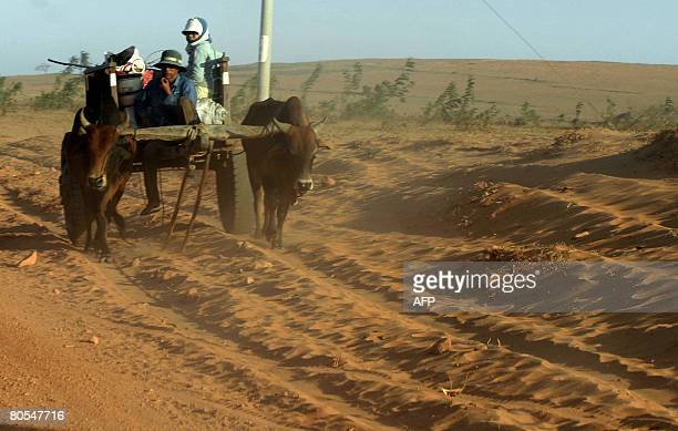 Farmers ride on a cowpulled cart on a field hit by desertification in southern province of Binh Thuan on March 16 2008 Over nine million hectares of...