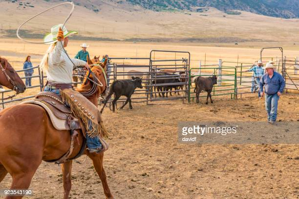 farmers roping cattle for branding - livestock branding stock photos and pictures