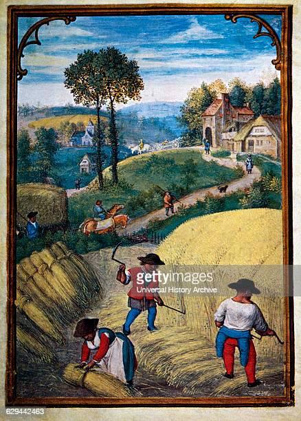 Farmers Scything Wheat Field, August, Illustration from Flemish Prayer Book, Simon Bening, 1500's.