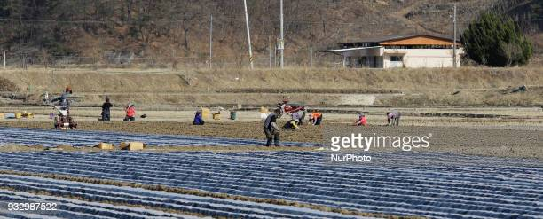 Farmers seed potatoes and Spring Onion with a farm machinery at the field in Hamchang south of Seoul Gyeongbuk Province South Korea on 17 March 2018...