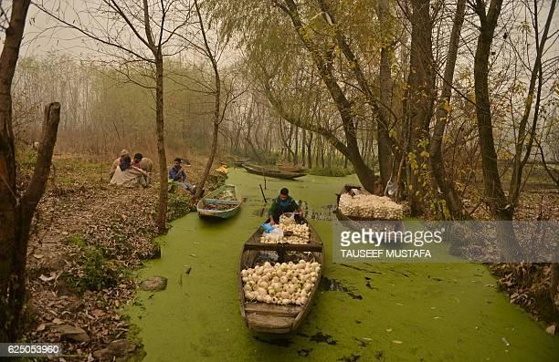 Farmers sort out radish crop on a boat on Dal lake in Srinagar on November 222016 / AFP / TAUSEEF MUSTAFA