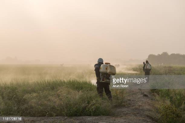 farmers spraying pesticide on green paddy field during sunrise in supanburi, thailand. - glyphosate stock pictures, royalty-free photos & images