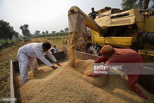 Farmers spread newlyharvested rice in a tractor trolley in the Chiniot district of Punjab province Pakistan on Saturday Oct 13 2012 Rice exports from...