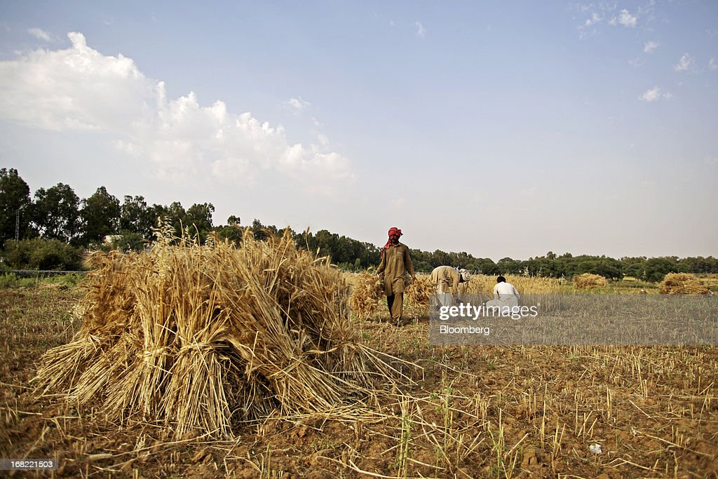 Farmers stack bundles of wheat during a harvest in the Fatehganj district of Punjab province, Pakistan, on Sunday, May 5, 2013. Pakistan wheat output to increase this year, the U.S Department of Agriculture's Foreign Agricultural Service said in a report posted today on its website on April 4. Photographer: Asad Zaidi/Bloomberg via Getty Images