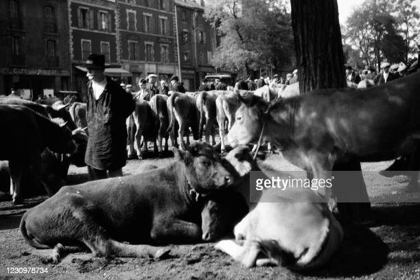Farmers take part in a cattle fair on June 14, 1948 in Decazeville, in Aveyron.
