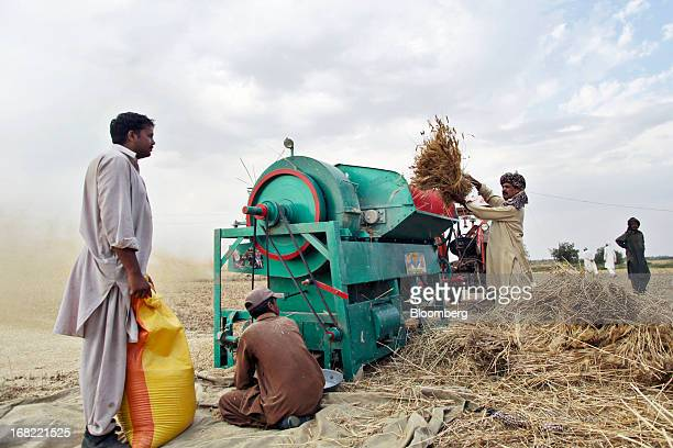 Farmers thresh bundles of wheat during a harvest in the Chakwal district of Punjab province Pakistan on Saturday May 4 2013 Pakistan wheat output to...