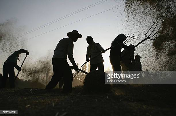 Farmers thresh grain at a farm on July 24 2005 in Tongxin County of Ningxia Hui Autonomous Region northwest China Chinese Vice Premier Hui Liangyu...