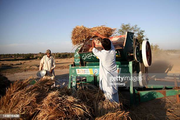 Farmers thresh wheat during a harvest in the Chakwal district of Punjab province Pakistan on Thursday May 3 2012 Pakistan is Asia's thirdlargest...