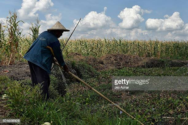 Farmers trying to catch fish in Midsayap North Cotabato on April 15 2016 in Maguindanao Province Philippines For more than forty years the southern...