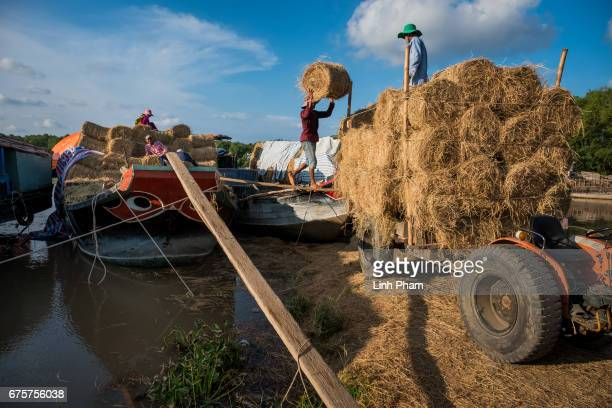 Farmers unload a straw boat from An Giang on April 28 2017 in Dai Hoa Loc Village Binh Dai District Ben Tre Province Vietnam Due to the lack of fresh...