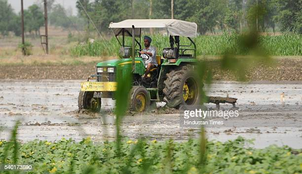 Farmers use tractor to plough to prepare field for Paddy cultivation at village Laut on June 14 2016 near Patiala India Though the Punjab government...