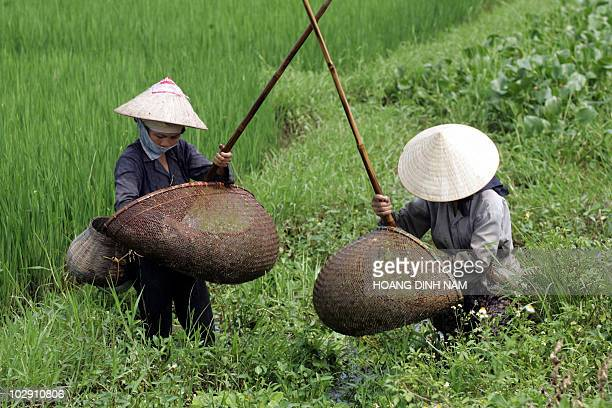 Farmers use traditional bamboo fishing tools to catch fish and shrimps on a rice field in northern province of Ha Tay 24 August 2006 Despite a...