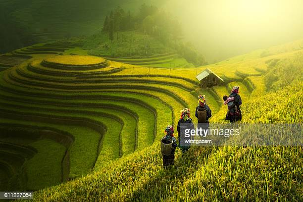 farmers walking on rice fields terraced - rice terrace stockfoto's en -beelden