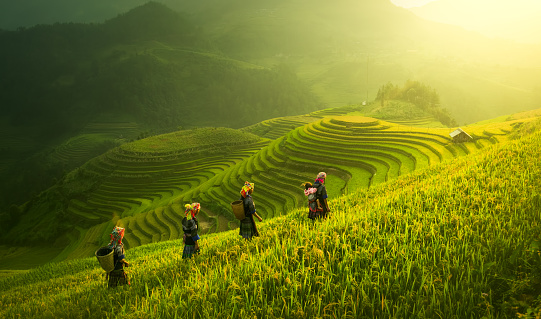 Farmers walking on rice fields terraced - gettyimageskorea