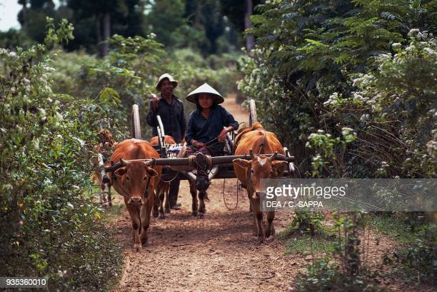 Farmers with an oxdrawn cart Angkor Cambodia