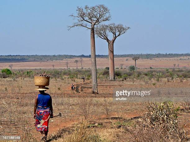 farmers with baobab trees in madagascar - madagascar stock photos and pictures