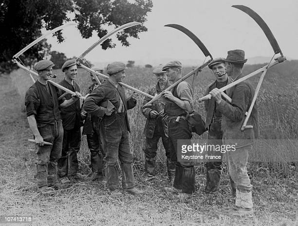 Farmers With Scythes On The Field