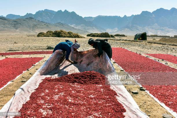 Farmers work at a field to sundry pomegranate seed in Kandahar on October 7, 2020.