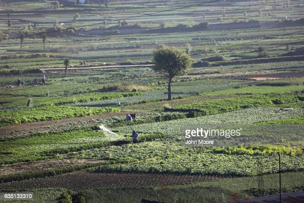 Farmers work fertile fields on February 11 2017 in Almolonga Guatemala Almolonga a Mayan town in the western highlands district of Quetzaltenango has...