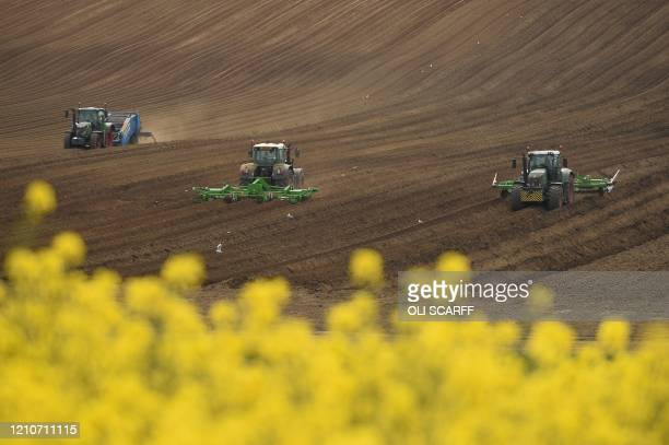Farmers work with vehicles to prepare a field next to a field of flowering rapeseed near Pontefract, northern England, on April 23, 2020 as life...