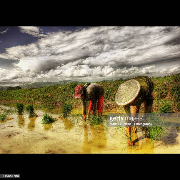 farmers working at farmers - filipino farmer stock photos and pictures
