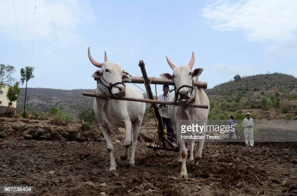 Farmers working in a field near Rajgad Fort the First Capital of King Shivaji in Velha Taluka on June 2 2018 in Pune India