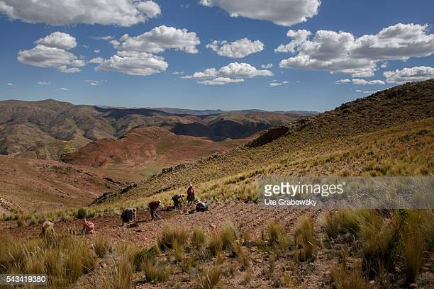 Farmers working in the fields in the Andes of Bolivia on April 14 2016 in Sacaca Bolivia
