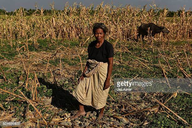"""Farmers working on a dried up corn field in Sultan Sabarongis in Maguindanao on April 18, 2016 in Maguindanao Province, Philippines. """"Mindanao is a..."""