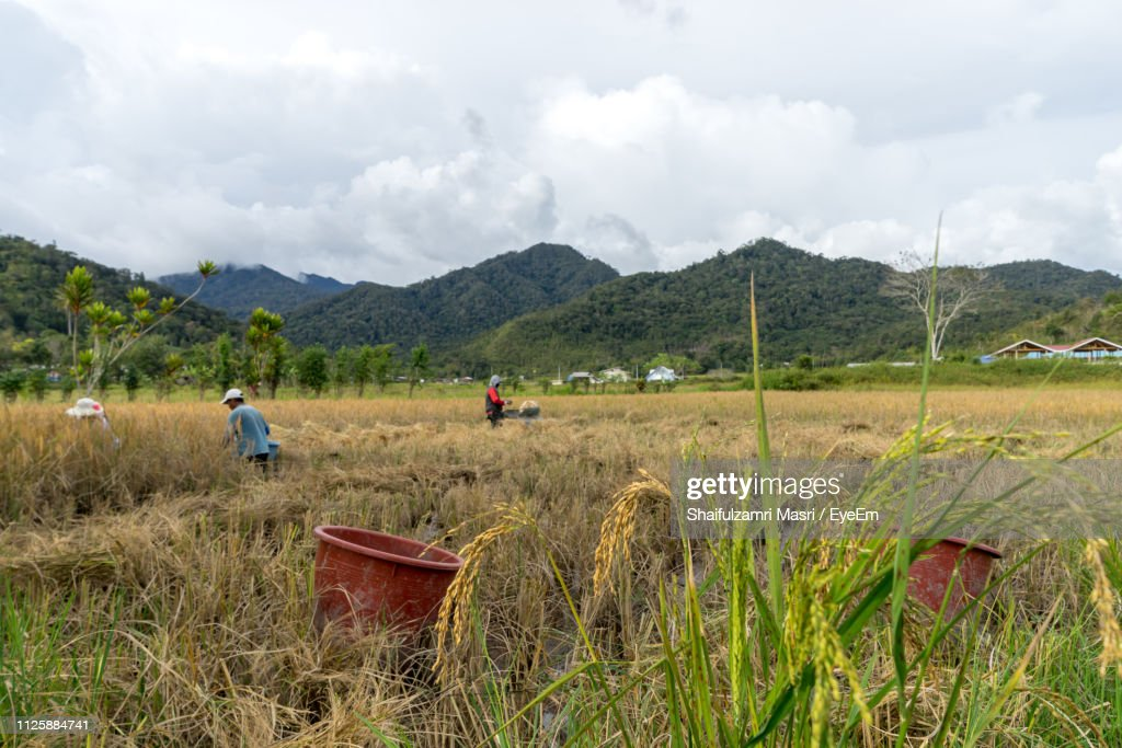 Farmers Working On Agricultural Field : Stock Photo