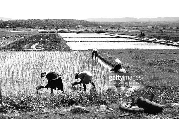 farmers working on field - filipino farmer stock photos and pictures