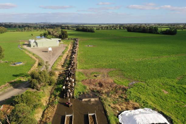 AUS: Dairy Farming in Victoria Amid The Threat of Tariffs