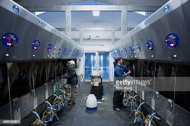Farmhands begin the process of milking cows at the Mount Kolb dairy farm in Caledon Ontario Canada on Wednesday Nov 18 2015 While the 12nation...