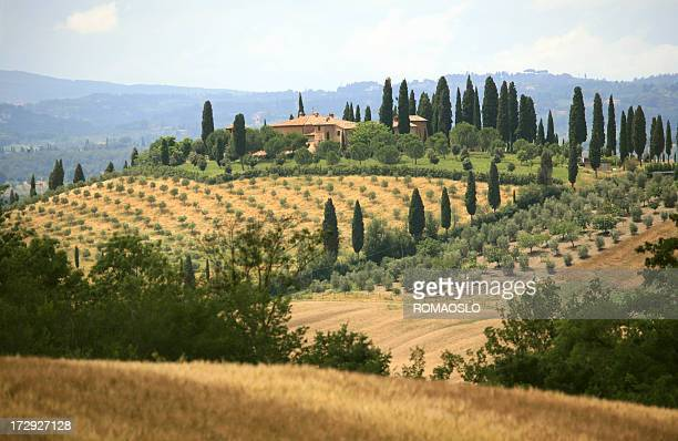 Farmhouse and cypress lined road in Tuscany,Italy