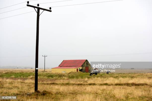 Farmhouse and Icelandic horse at Selfoss, South Iceland