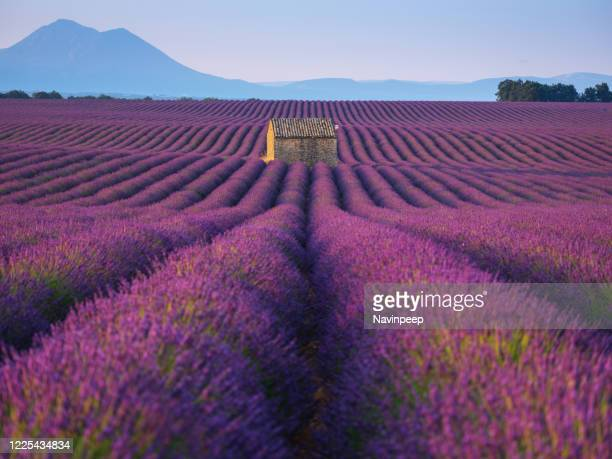 farmhouse and lavender field, provence, france - provence alpes cote d'azur stock pictures, royalty-free photos & images