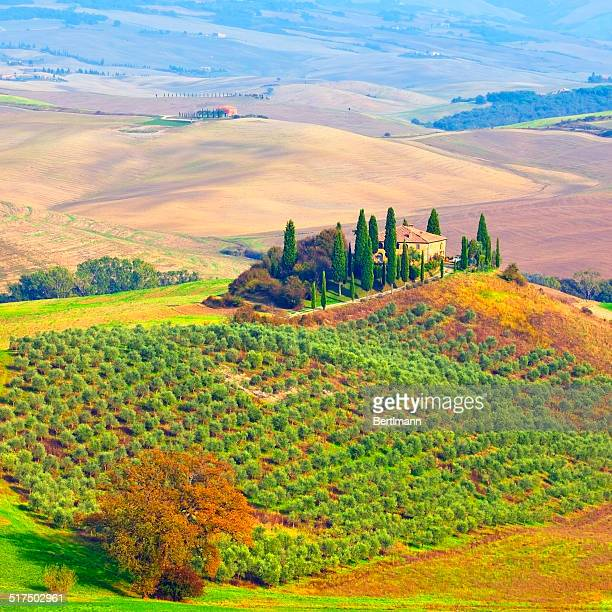 farmhouse in tuscany - olive orchard stock photos and pictures