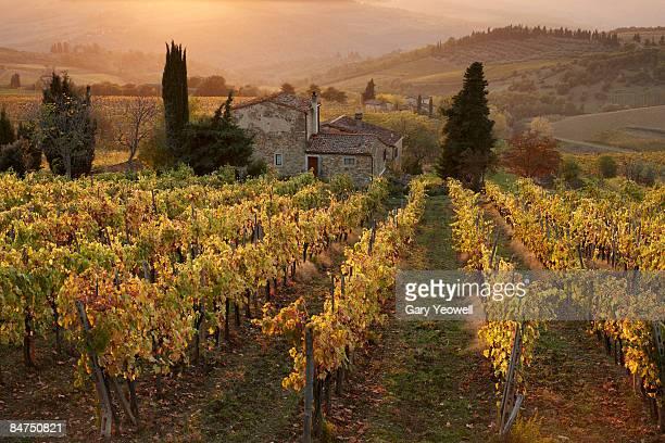 Farmhouse in  vineyard at sunset